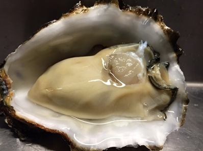 Onderzoek duurzame productietechniek hoogwaardige oester