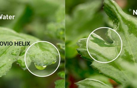 Noviohelix inzetten voor eetbare gewassen