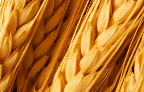 IMAX - Immuunsysteem versterkende arabinoxylanen uit tarwe
