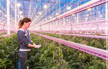 Ontwikkeling LED-assimilatiebelichting voor de glastuinbouw