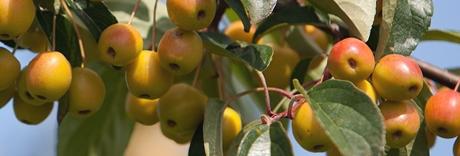 Waterefficiency in de fruitsector
