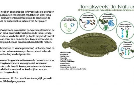 Tongkweek