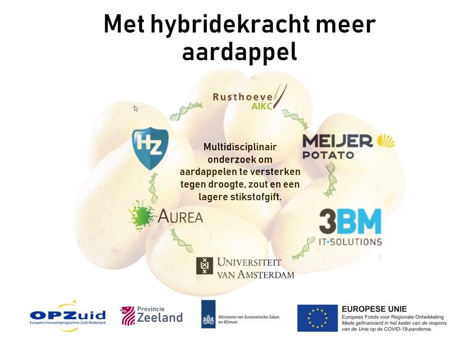 Afbeelding bij artikel over REACT-EU project Met hybridekracht meer aardappel