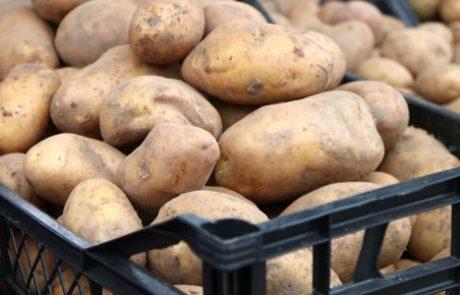 Meer gewas per korrel in consumptieaardappelen Meeuwissen Gastel