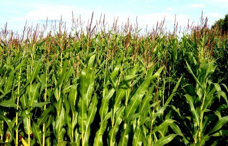 Van generieke naar specifieke bemesting in maïs