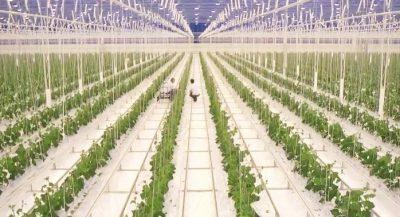 Agrofood meets high tech