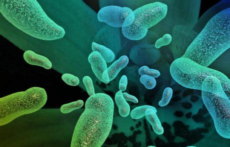 Bio-aerosolen