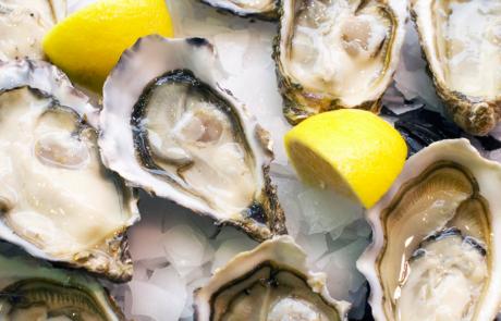 Opkweeksysteem oesterindustrie