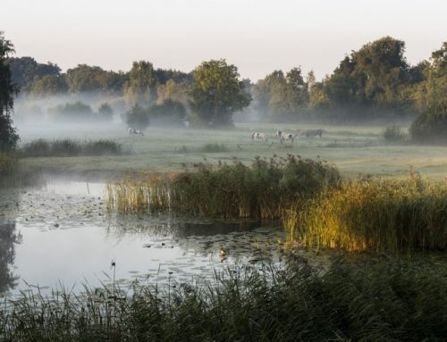 Ruim 12 miljoen EU-subsidie voor natuur en biodiversiteit infobijeenkomst op 10 oktober