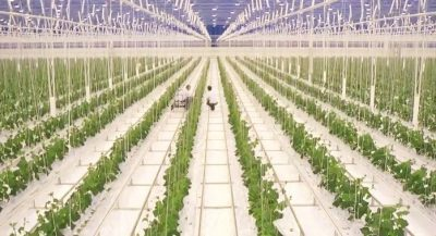 Agrofood meets high tech