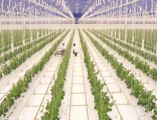 11 miljoen voor vernieuwing en verduurzaming agrofoodsector
